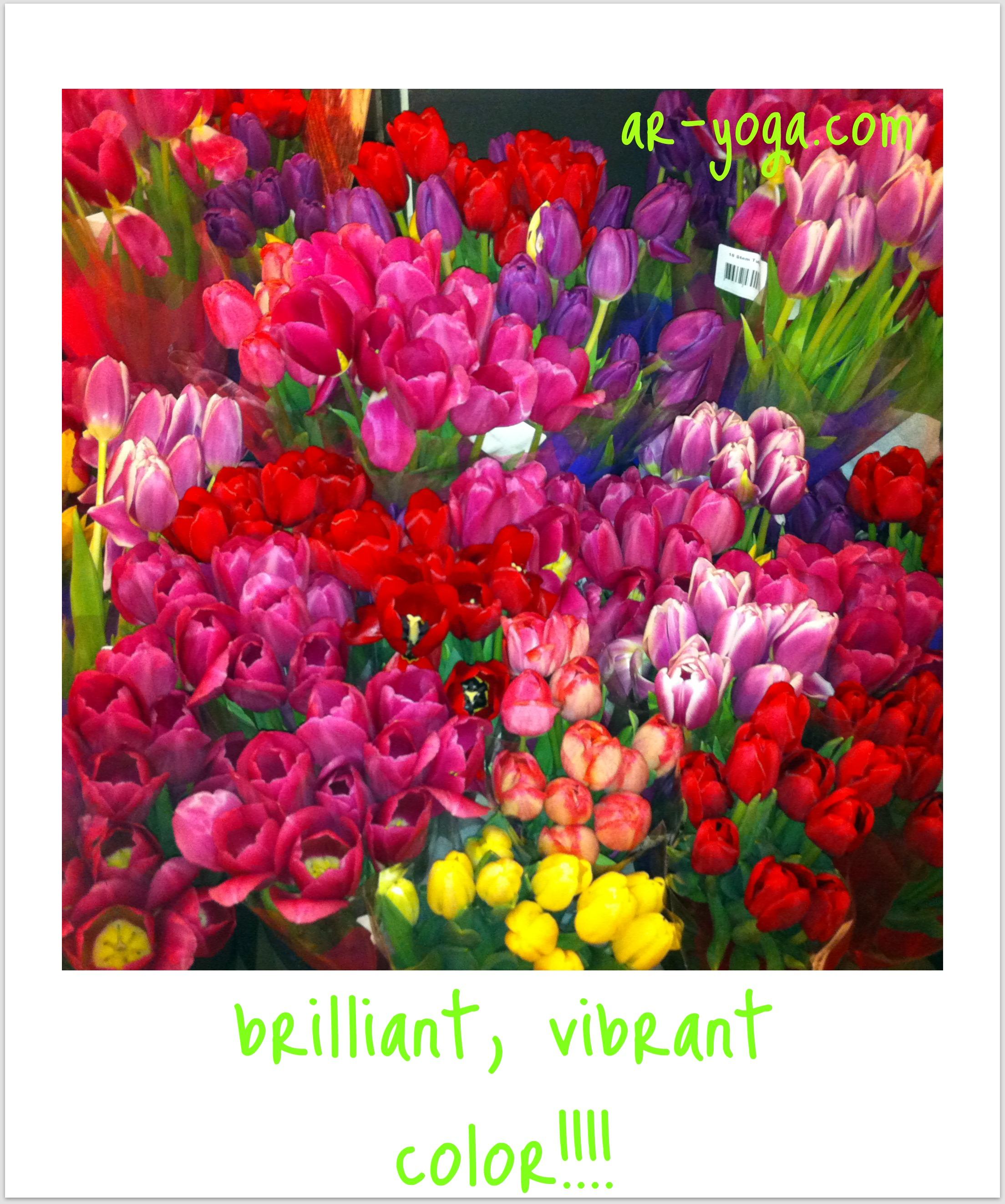 briliant colorful flowers